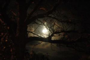 Moon through Tree at Night