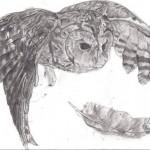 """""""Tawny Owl"""" by Shele Katryna Cox"""