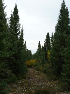 Forested Path