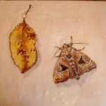 Trompe l'oeil with moth and leaf